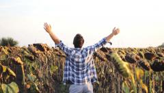 Hipster  man in sunflower field Hands of Freedom  - stock footage