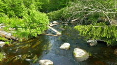 Moss on Stones in a Small Forest River Stock Footage