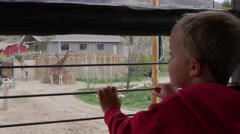 A cute young boy watching giraffes at the zoo gimbal shot Stock Footage