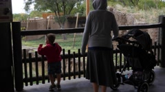 A cute young boy watching lions at the zoo gimbal shot Stock Footage