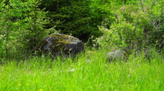 Rock Stones on Green Grass Stock Footage
