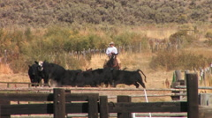 A rancher slowly rides with his cattle herd Stock Footage