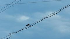 Swallow Bird Flying Slow Stock Footage