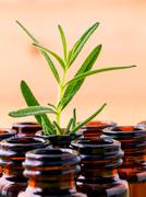 Natural Spa Ingredients rosemary essential oil for aromatherapy shallow depth - stock photo