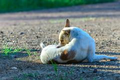 White dog self cleaning tick and flea. Stock Photos
