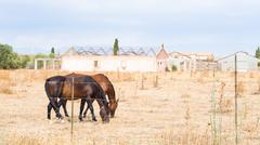 horses greenhouses agriculture - stock photo