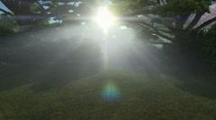 Magic forest, sun shinning through trees, tilt up Stock Footage
