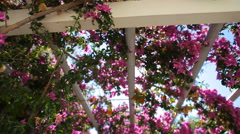 Pink bougainvillea against the sky. Stock Footage