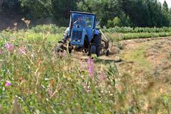 Blue wheeled  russian farm tractor working on mown meadow, hayfield. - stock photo