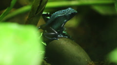 Poison Dart Frog Stock Footage