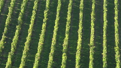 Vineyard hills on the banks of the Garonne Stock Footage