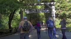 Tourists Walk Into Muir Woods National Monument Stock Footage