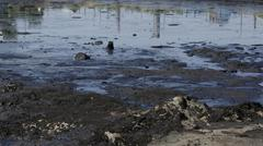 The former dump toxic waste in Ostrava, oil lagoon, Ostramo Stock Photos