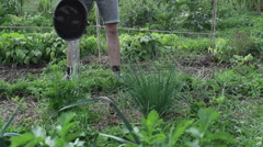 Man waters green onions in his lush green organic vegetable garden Stock Footage