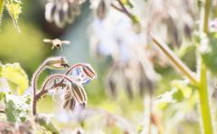 Flying bee pollinating in summer garden - stock photo