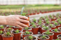 Stock Photo of Skillful senior florist is planting vegetation at garden center