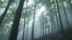 Mystical forest enveloped in fog and sunrays Stock Footage