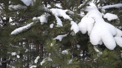winter Christmas tree on the mountain which sledding - stock footage
