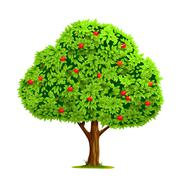 Apple tree with apple Stock Illustration