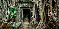 Ancient stone door and tree roots, Ta Prohm temple Stock Photos
