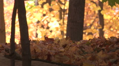 Toronto beautiful autumn colors in mid fall season Stock Footage