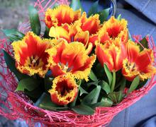 Fiery red and orange tulips in a bouquet Stock Photos