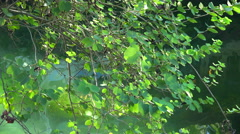 Overflow of light and shadow in the pond - stock footage