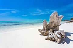 Snag on the tropical beach - stock photo