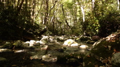 Stock Video Footage of sunny rocky appalachian river