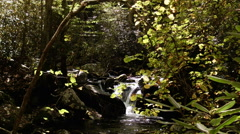 waterfall early autumn leaves - stock footage
