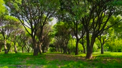 Background summer park - stock footage