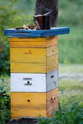 High bee hive in the apiary Stock Photos