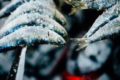 Fish Espetos preparation. Espetos - skewer with sardines in open Stock Photos
