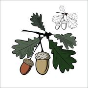 Acorn and leaf Stock Illustration