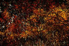 Creating Autumn Foliage - Stock Illustration