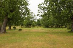 Oaks Mount - - stock photo
