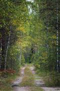 Uneven forest road in summer forest Stock Photos