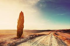 Cypress tree and field road in Tuscany, Italy at sunset. Val d'Orcia Stock Photos