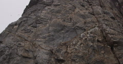 Slow motion - looking up at see bids flying near face of cliff - stock footage