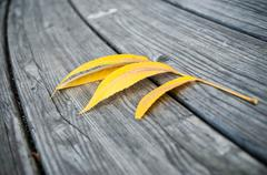 Autumnal yellow leaf on wooden background Stock Photos