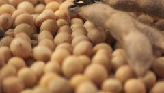 Soybeans and plant Stock Footage