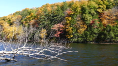Autumn landscape with a pond and dead tree Stock Footage