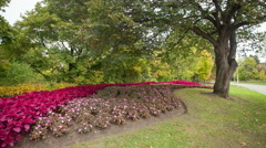 Flower bed and trees in a park - stock footage