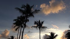 Silhouetted coconut palm trees in the Florida Keys Stock Footage