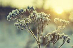 Frozen meadow plant Stock Photos