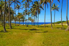 Beach with palm trees on Easter Island, Chile Stock Photos