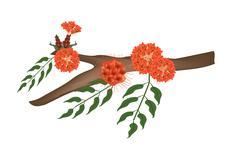 Scarlet Flame Bean or Brownea Ariza Flower on Tree - stock illustration