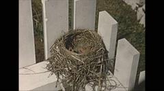 Vintage 16mm film, 1957, America, Robin nest chicks mcu Stock Footage