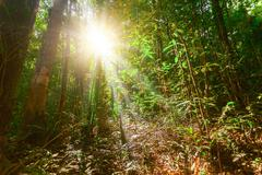 tropical forest and sunshine in Thailand - stock photo