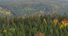 Pan of black forest in fall Stock Footage